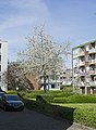 Blooming tree in Hof van Delft.jpg
