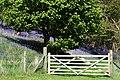Bluebell woods - geograph.org.uk - 1282092.jpg