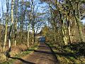 Boarland Wood. - geograph.org.uk - 83063.jpg