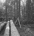 Bosbewerking, arbeiders, boomstammen, overzichten, Bestanddeelnr 253-5119.jpg