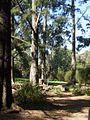 Botanic gardens in canberra1.JPG