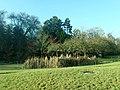 Botanical Garden Berlin 2019-12-13 5791.jpg
