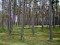 Braslaw District, Belarus - panoramio - alinco fan (2).jpg