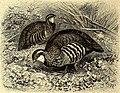 Brehms Tierleben - allgemeine Kunde des Tierreichs - mit 1800 Abbildungen im Text, 9 Karten und 180 Tafeln in Farbendruck und Holzschnitt (1891) (20226620328).jpg