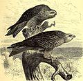 Brehms Tierleben - allgemeine Kunde des Tierreichs - mit 1800 Abbildungen im Text, 9 Karten und 180 Tafeln in Farbendruck und Holzschnitt (1892) (20420784091).jpg