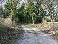 Bridleway into Puddletown Forest - geograph.org.uk - 1180788.jpg