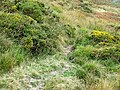 Bridleway to Abergwesyn, Cwm Culent, Powys - geograph.org.uk - 1568816.jpg