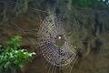 Bronx Zoo Spider Web.jpg