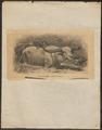 Bubalis kerabau - 1700-1880 - Print - Iconographia Zoologica - Special Collections University of Amsterdam - UBA01 IZ21200169.tif
