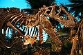 Bucky the T. Rex 1.jpg