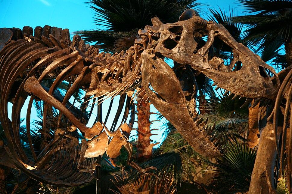 Bucky the T. Rex 1
