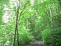 Budshead Wood, Plymouth. - geograph.org.uk - 915014.jpg