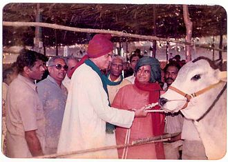 Ongole cattle - Ongole Bull reared by Sri D T Moses at Pernamitta after winning the Andhra Pradesh State Award in 1988 with Sri N.T. Rama Rao (green turban)  then Chief Minister of Andhra Pradesh and Sri Balaram Jhakar (red turban) then Agricultural Minister, Government of India.