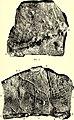 Bulletin de la Société belge de géologie, de paléontologie et d'hydrologie (1899) (20406545666).jpg