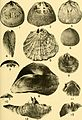 Bulletins of American paleontology (1953-1955) (20314932198).jpg
