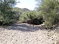 Butcher Jones Trail - Mt. Pinter Loop Trail, Saguaro Lake - panoramio (172).jpg