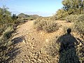 Butcher Jones Trail - Mt. Pinter Loop Trail, Saguaro Lake - panoramio (45).jpg