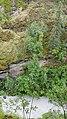 By ovedc - Thunderbird Falls - 02.jpg