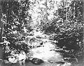 COLLECTIE TROPENMUSEUM De Wai-Kedongdong rivier bij grenspaal 'D' de Lampongse Districten Zuid - Sumatra. TMnr 60013385.jpg