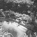 COLLECTIE TROPENMUSEUM Runderen bij het zwembad van het voormalige huis van Walter Spies in Campuhan Ubud TMnr 60030254.jpg