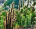 Cacti - panoramio - SCOTT CAMERON.jpg