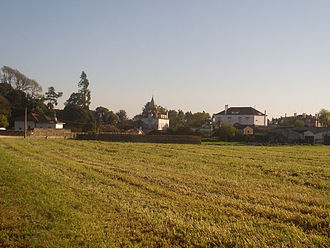 Localities of Póvoa de Varzim - Calves in the outskirts of Póvoa de Varzim.