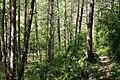 Camí de Campdevànol - panoramio.jpg