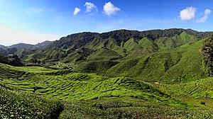 Pahang - Cameron Highlands