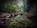 Caminata guiada selva y ríos.jpg