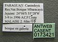 Camponotus helleri casent0173421 label 1.jpg