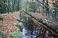 Canal in autumn - geograph.org.uk - 1595579.jpg
