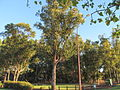 Canning vale bushland at campbell-amherst.jpg
