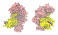 Cap-binding complex 1H2T.png