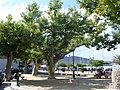 Cap Corse - Macinaggio - main square - panoramio.jpg