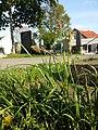 Carex hirta sl2.jpg