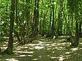 Carrefour de la route du Faîte et des Fossés d'Allu (Forêt de Montmorency) - panoramio - Eric Bajart.jpg