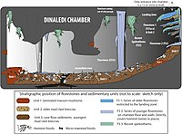 Cartoon illustrating the geological and taphonomic context and distribution of fossils, sediments and flowstones within the Dinaledi Chamber.jpg