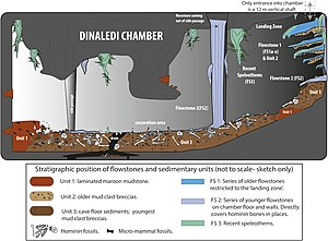 Homo naledi - Illustration of the Dinaledi Chamber within Rising Star Cave, where the bones of H. naledi were excavated