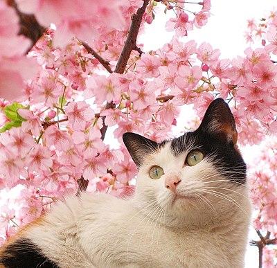 Cat (412403542).jpg