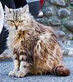 Cat Cagnes-sur-Mer.jpg