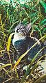 Cat pisik kedi animal pussy svln4821 cute 04.jpg