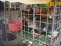 Cats at a cat meat restaurant - 02.jpg