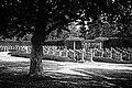 Cemetery of Lebbeke Belgium 06.jpg