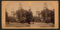 Century plant in full bloom in Southern California, by Bonine, R. (Robert K.).png