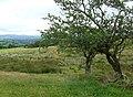 Ceredigion Landscape with Hawthorn Trees - geograph.org.uk - 914672.jpg