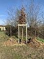 Chêne offert par la mairie planté par Henry Peyrelongue (2021-02-20).jpg