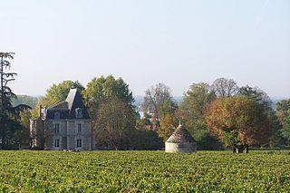 Ponty vineyards