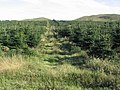 Christmas tree plantation below the Cheviot Hills - geograph.org.uk - 241011.jpg