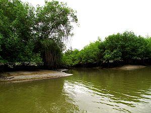 Reserva ecologica