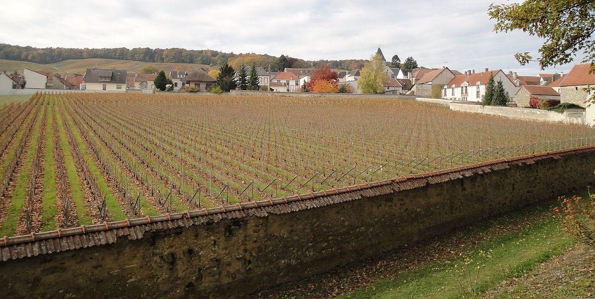 The Clos du Mesnil vineyard in Le Mesnil-sur-Oger, Côte de Blancs, Champagne. This vineyard is used to produce Krug's Clos du Mesnil Champagne.